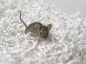 Mouse running through shredded paper - Document storage - the risks of adopting a DIY approach